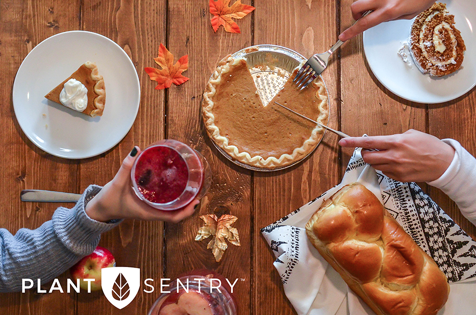 Thanksgiving Pie and Drink Plant Sentry Image