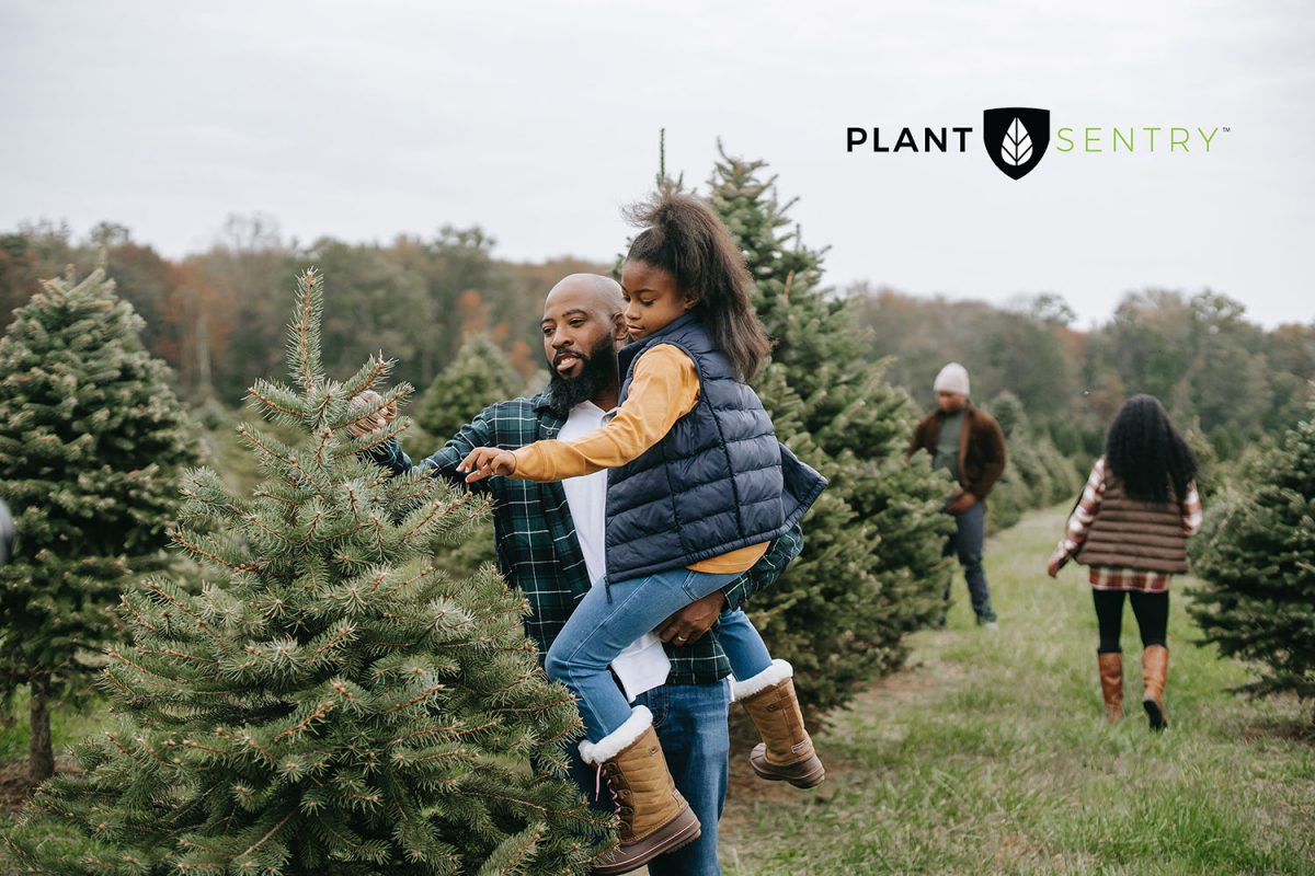 Christmas Tree Farm with Father and Daughter